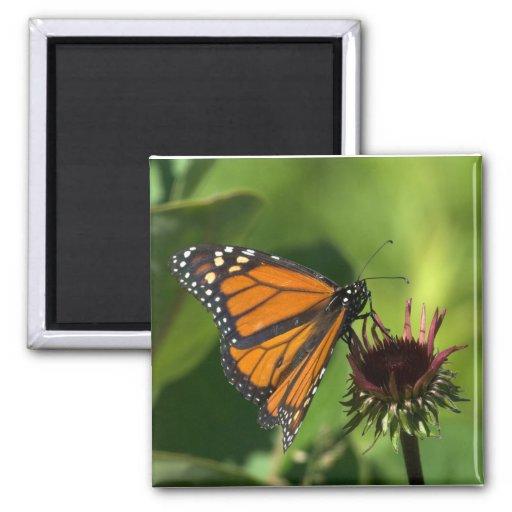 Mariposa de monarca imán de frigorífico