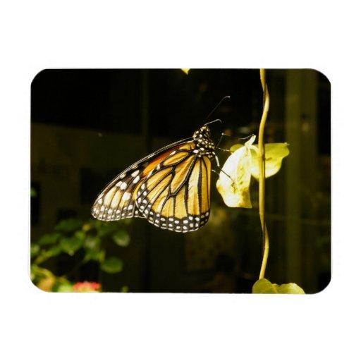 Mariposa de monarca imanes flexibles