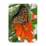 Mariposa de monarca imanes rectangulares