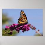 Mariposa de monarca impresiones