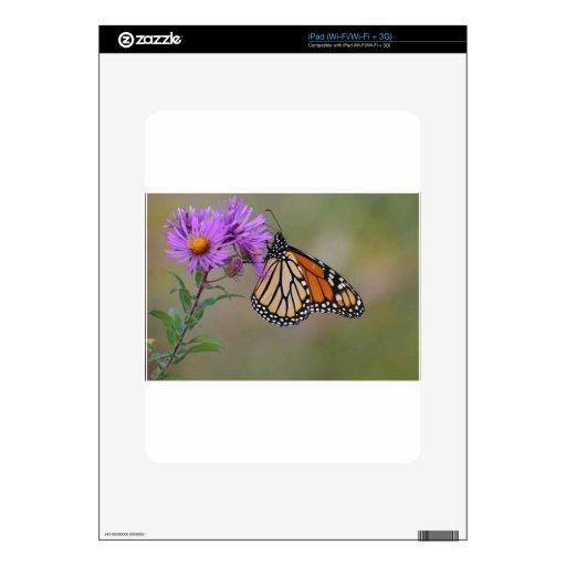 Mariposa de monarca iPad calcomanías