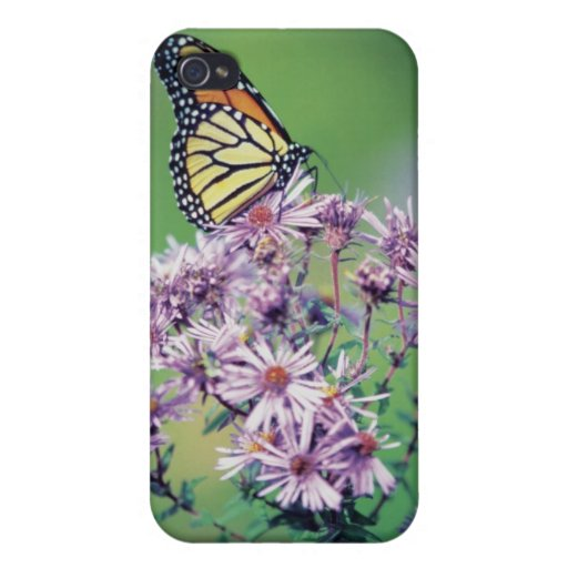 Mariposa de monarca iPhone 4 carcasa