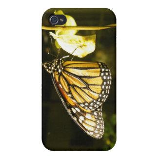 Mariposa de monarca iPhone 4 fundas