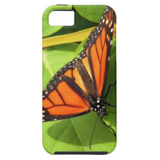 Mariposa de monarca iPhone 5 carcasa