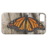 Mariposa de monarca iPhone 5 fundas