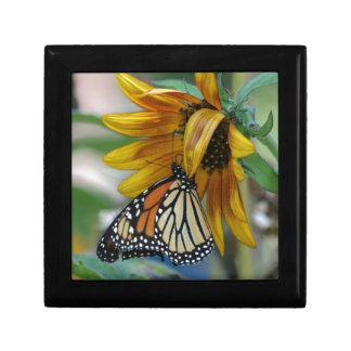 Mariposa de monarca magnífica en el girasol cajas de regalo