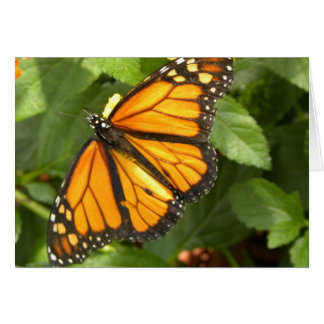 Mariposa de monarca - Notecard en blanco adaptable Tarjeta De Felicitación