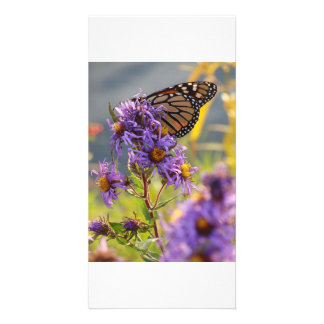 Mariposa de monarca pasada tarjetas fotográficas personalizadas