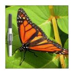 Mariposa de monarca pizarras blancas