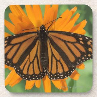 Mariposa de monarca (plexippus del Danaus) en el Posavasos