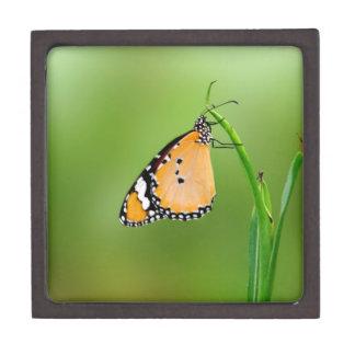 Mariposa de monarca cajas de joyas de calidad