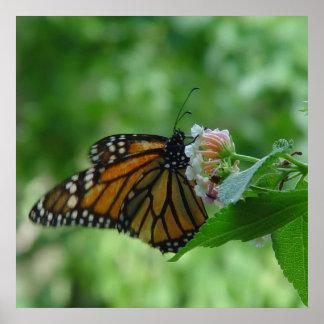 Mariposa de monarca que agita en el poster de la f