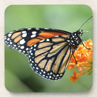 Mariposa de monarca que alimenta en la flor posavasos de bebida