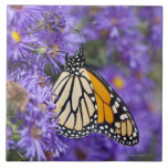 Mariposa de monarca que alimenta en las flores del azulejo cuadrado grande