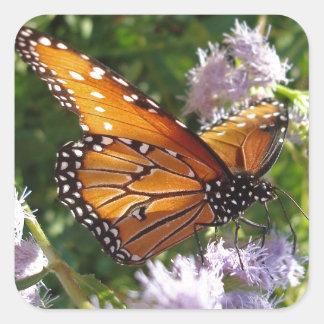 Mariposa de monarca que descansa sobre una flor pegatina cuadrada