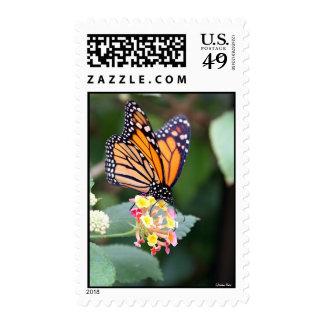Mariposa de monarca sello