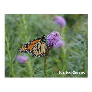 Mariposa de monarca postal
