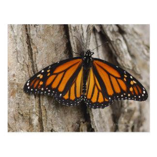 Mariposa de monarca tarjeta postal
