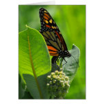 Mariposa de monarca tarjeton