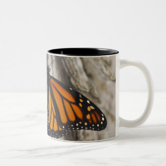Mariposa de monarca taza de dos tonos