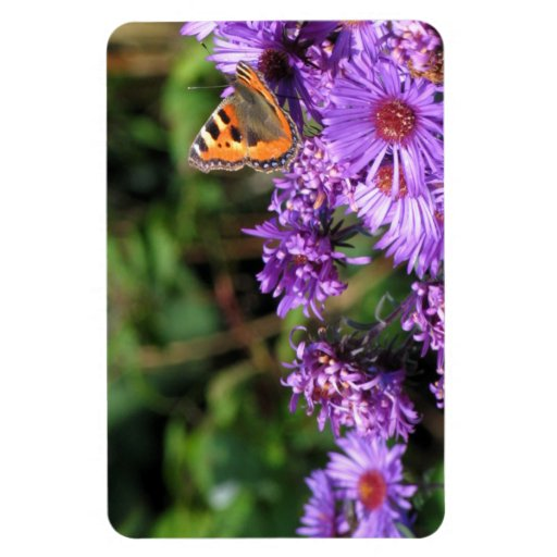 Mariposa de monarca y flores púrpuras iman flexible