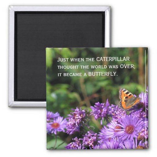 Mariposa de monarca y flores púrpuras imán cuadrado