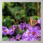 Mariposa de monarca y flores púrpuras poster