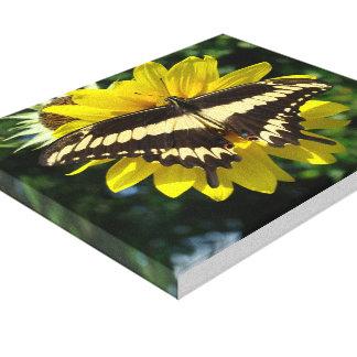 Mariposa de Ornythion Swallowtail Lona Estirada Galerías