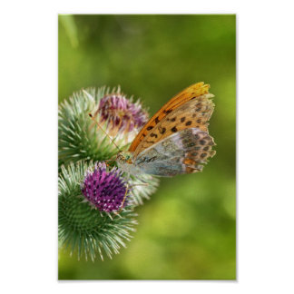 Mariposa de Paphia del Argynnis en la flor de Card Poster