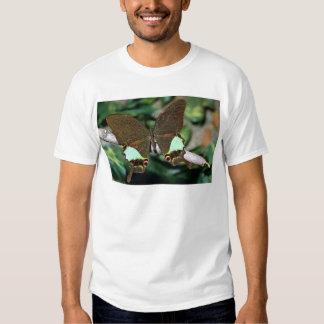 Mariposa de Papilionoideae, Malasia Camisas