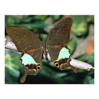 """Mariposa de Papilionoideae, Malasia Folleto 8.5"""" X 11"""""""
