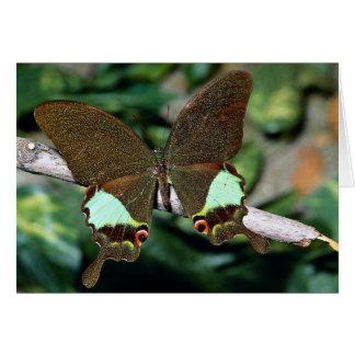 Mariposa de Papilionoideae, Malasia Tarjeta De Felicitación