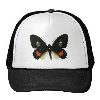 Mariposa de Parides Swallowtail Gorro