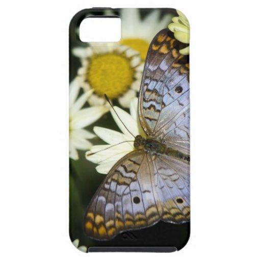 Mariposa de pavo real blanca iPhone 5 Case-Mate protectores