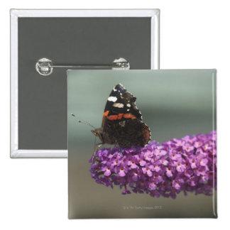 Mariposa de pavo real en la flor pin cuadrado