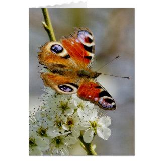 Mariposa de pavo real - mariposa en la flor del tarjeta de felicitación