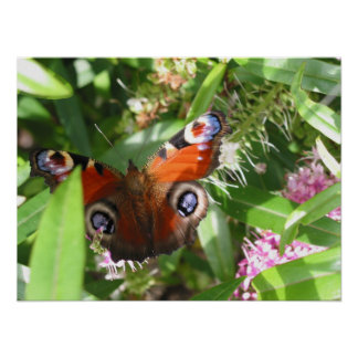 Mariposa de pavo real póster