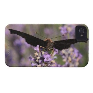 mariposa de pavo real que chupa el néctar de la funda para iPhone 4 de Case-Mate