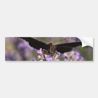 mariposa de pavo real que chupa el néctar de la pegatina para auto