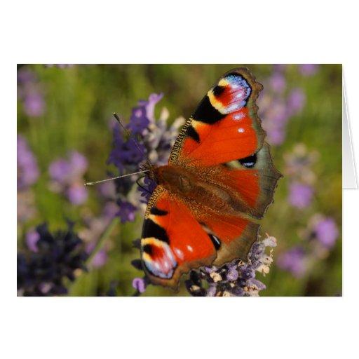 mariposa de pavo real tarjeta pequeña