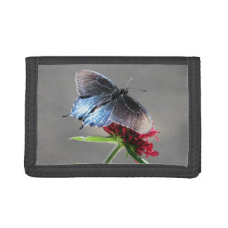 Mariposa de Pipevine Swallowtail