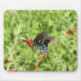 Mariposa de Pipevine Swallowtail Mousepads