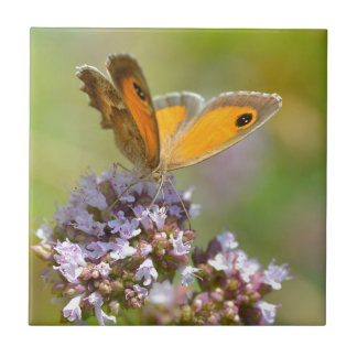 Mariposa de Pyronia en la flor Azulejo