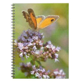 Mariposa de Pyronia en la flor Libretas
