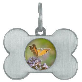 Mariposa de Pyronia en la flor Placas De Mascota
