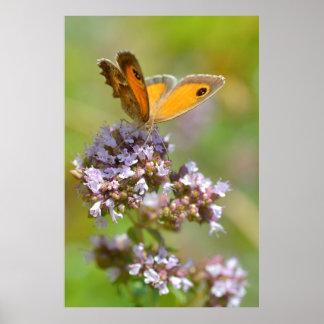 Mariposa de Pyronia en la flor Impresiones