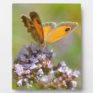 Mariposa de Pyronia en la flor Placas De Plastico