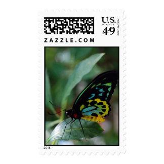 Mariposa de relajación sello