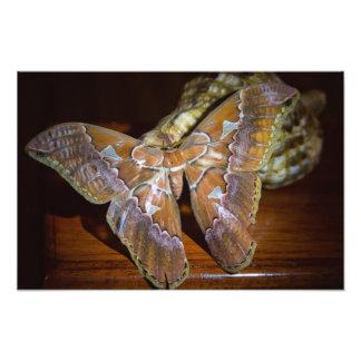 Mariposa de Rican de la costa Arte Fotográfico