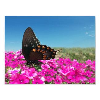 Mariposa de Spicebush Swallowtail Cojinete